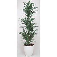 【送料無料】ワーネッキー (人工観葉植物) 高さ180cm 光触媒 (147A300)