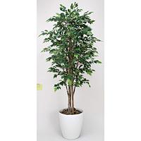 【送料無料】ロイヤルベンジャミン (人工観葉植物) 高さ180cm 光触媒 (151B550)