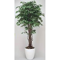 ベンジャミンリアナ (人工観葉植物) 高さ180cm 光触媒 (152A480)