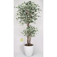 トロピカルベンジャミン 斑入り (人工観葉植物) 高さ180cm 光触媒 (167B480)