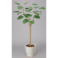【送料無料】ウンベラータ (人工観葉植物) 高さ180cm 光触媒 (172A350)