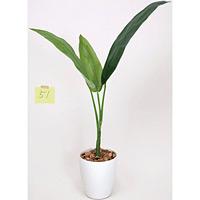 【送料無料】トラベラーズパーム (人工観葉植物) 高さ110cm 光触媒 (205A100)