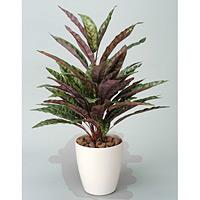 ピーコック (人工観葉植物) 高さ68cm 光触媒 (215A80)