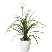 【送料無料】ユッカ花付 (人工観葉植物) 高さ81cm 光触媒 (222A80)
