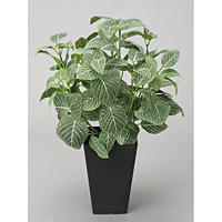 フィットニアS(フロック加工) (人工観葉植物) 高さ43cm 光触媒機能付 (230A50)