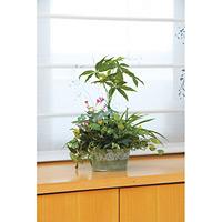 寄せ植えパキラ (人工観葉植物) 高さ45cm 光触媒機能付 (239B70)