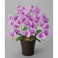 エンジェル胡蝶蘭L (造花) 高さ60cm 光触媒 (23A70)