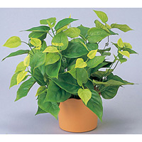 ライムポトス (人工観葉植物) 高さ36cm 光触媒機能付 (247B50)