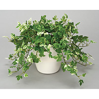 アンペロシスアイビーM (人工観葉植物) 高さ28cm 光触媒 (249B60)