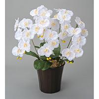エンジェル胡蝶蘭W (造花) 高さ60cm 光触媒 (24A70)