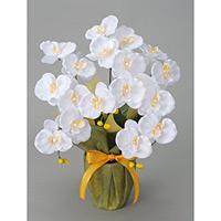 ミディ胡蝶蘭W (造花) 高さ50cm 光触媒 (25A35)