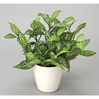 シルバーキング (人工観葉植物) 高さ34cm 光触媒 (260A30)