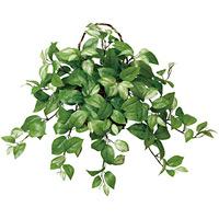 壁掛ホヤ (人工観葉植物) 高さ50cm 光触媒 (268A60)