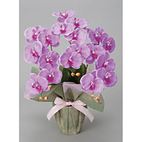 ミディ胡蝶蘭L (造花) 高さ50cm 光触媒 (26A35)