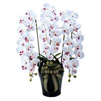 【送料無料】ロイヤル胡蝶蘭W/AB (造花) 高さ80cm 光触媒 (310A200)