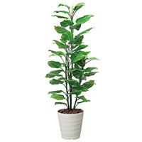 【送料無料】フレッシュポトス (人工観葉植物) 高さ180cm 光触媒 (354A300)