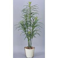 【送料無料】ドラセナコンシンネ (人工観葉植物) 高さ130cm 光触媒 (368B180)