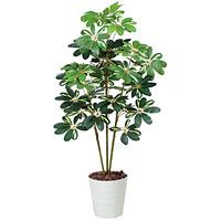 【送料無料】カポック 斑入り (人工観葉植物) 高さ120cm 光触媒 (371A150)