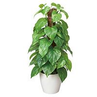 フレッシュポールポトス (人工観葉植物) 高さ48cm 光触媒 (382A50)