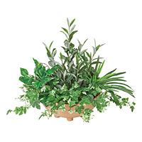 【送料無料】寄せ植えオリーブ (人工観葉植物) 高さ48cm 光触媒機能付 (383A100)