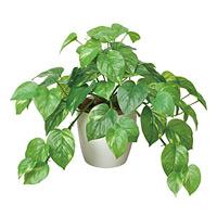 フレッシュポトス (人工観葉植物) 高さ36cm 光触媒 (384A50)