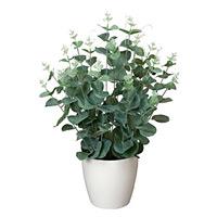 ユーカリ (人工観葉植物) 高さ42cm 光触媒機能付 (385A50)