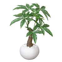 パキラポット (人工観葉植物) 高さ27cm 光触媒 (386A30)