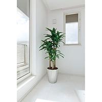 【送料無料】幸福の木 (人工観葉植物) 高さ160cm 光触媒 (400A300)