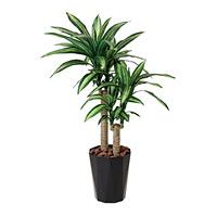 【送料無料】幸福の木 (人工観葉植物) 高さ110cm 光触媒 (406A180)