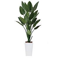 【送料無料】ストレチアW (人工観葉植物) 高さ160cm 光触媒 (409A500)