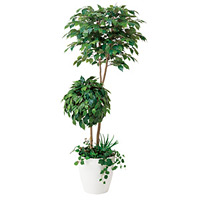 【送料無料】ベンジャミンダブルフェイス 植栽付 (人工観葉植物) 高さ180cm 光触媒 (413A500)
