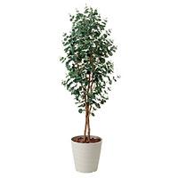 【送料無料】ユーカリ (人工観葉植物) 高さ155cm 光触媒 (417A280)