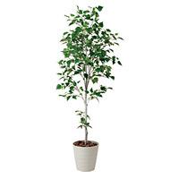 【送料無料】白樺シングル (人工観葉植物) 高さ180cm 光触媒 (421A300)