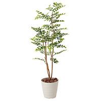 【送料無料】ゴールデンリーフ (人工観葉植物) 高さ125cm 光触媒 (423A180)