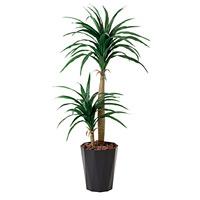 【送料無料】ドラセナコンシンネ (人工観葉植物) 高さ130cm 光触媒 (427A160)