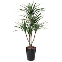 【送料無料】ユッカ (人工観葉植物) 高さ135cm 光触媒 (429A250)