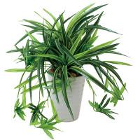 ドラセナ丸ポット (人工観葉植物) 高さ28cm 光触媒 (439A60)