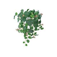 壁掛フレンチアイビー (人工観葉植物) 高さ50cm 光触媒 (440A50)