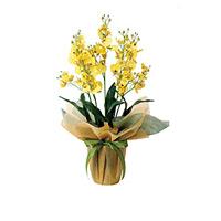 オンシジュームS (造花) 高さ50cm 光触媒 (455A40)