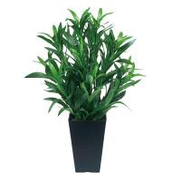 スパイダー (人工観葉植物) 高さ50cm 光触媒 (518A70)
