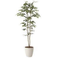 【送料無料】マウンテンアッシュ (人工観葉植物) 高さ160cm 光触媒 (604A270)