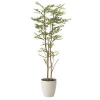 【送料無料】ゴールデンリーフ 1.6 (人工観葉植物) 高さ160cm 光触媒機能付 (605A310)