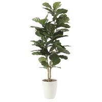 【送料無料】カシワバゴム (人工観葉植物) 高さ135cm 光触媒 (609E230)