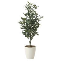 【送料無料】オリーブ (人工観葉植物) 高さ130cm 光触媒 (618A250)