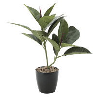 ゴムの木 (人工観葉植物) 高さ47cm 光触媒機能付 (637G50)