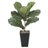 カシワバゴム (人工観葉植物) 高さ50cm 光触媒機能付 (638A45)