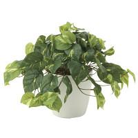 フレッシュポトス (人工観葉植物) 高さ30cm 光触媒機能付 (641A50)