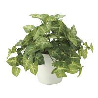 フレッシュカラージューム (人工観葉植物) 高さ30cm 光触媒機能付 (643A50)