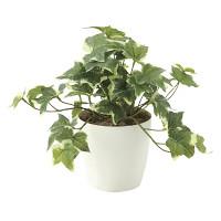 フレッシュ斑入りアイビーS (人工観葉植物) 高さ25cm 光触媒 (646A35)