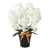 【送料無料】プレミアム胡蝶蘭5本立W (造花) 高さ75cm 光触媒 (651A180)
